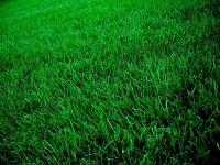 grass_small